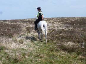 Pet on Exmoor (1)